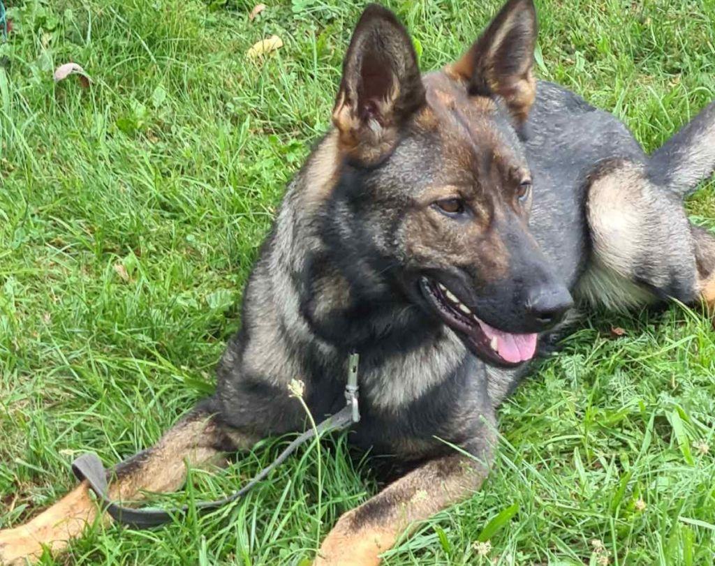 Policijski-pes